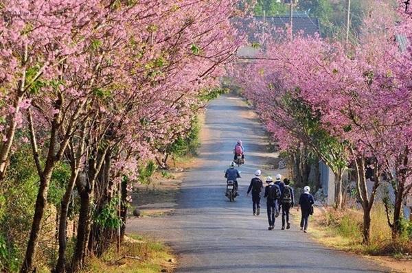 Cảnh đẹp của thành phố Đà Lạt xinh đẹp và thơ mộng