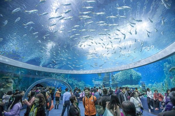 Viện Hải Dương Học Nha Trang – nơi nghiên cứu tập tính lối sống của sinh vật biển đầu tiên của Việt Nam, đến đây bạn được ngắm nhìn không gian biển và không gian khoa học nơi đây.